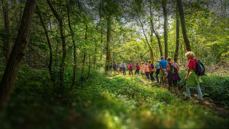 Randonnée en forêt de Desvres